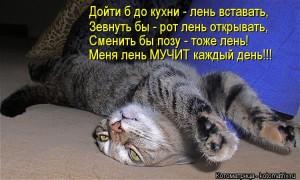 лень-кот