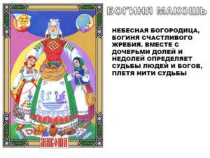 makosh-2